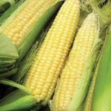 Corn, sweet