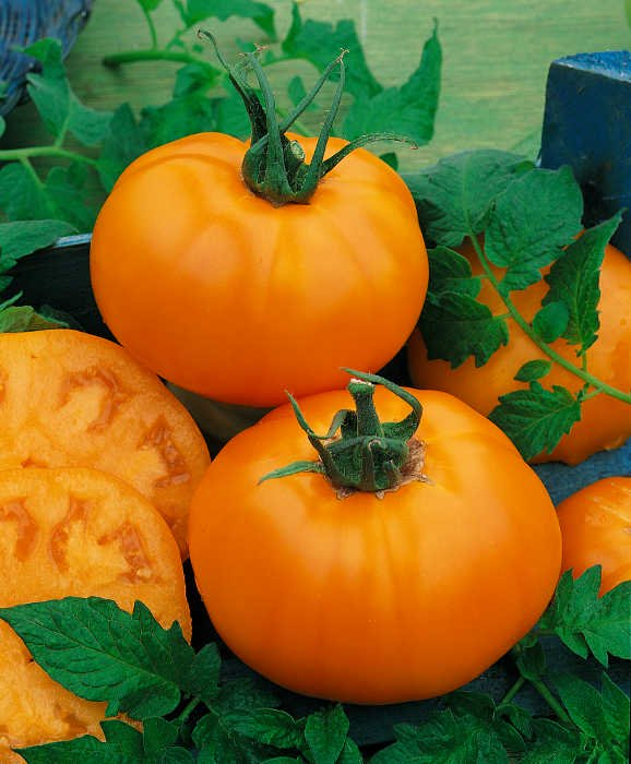 Tomato, Chefs  Choice Orange