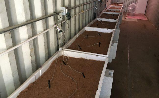 Living Soil Starter